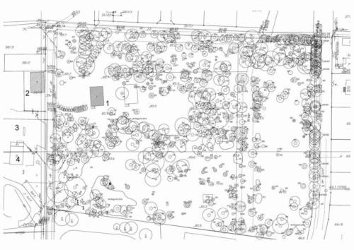 Inwentaryzacja zabytkowego parku wokół pałacu Łazy